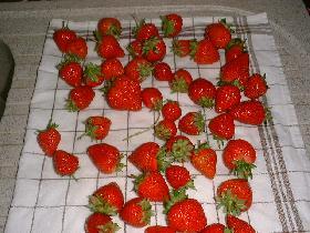 laver les fraises et les sécher sur un linge